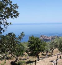Landscape: olive trees and Sa Foradada. Monastery of Miramar. Valldemossa, Mallorca. IRU, SL.